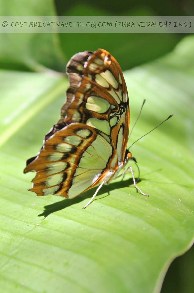 Costa Rica wildlife photography