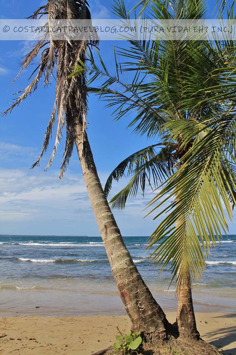 Playa Puerto Viejo Costa Rica Caribbean